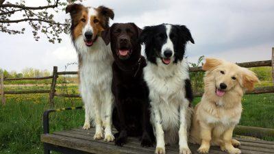 Hundeanmeldung